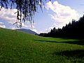 Tra boschi e prati - panoramio.jpg