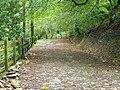 Track to Dolaucothi Farm - geograph.org.uk - 2082794.jpg