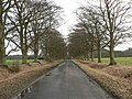 Tree-lined road - geograph.org.uk - 109227.jpg