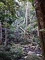 Treefall gap 2.jpg