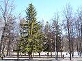 Trees in Memorial park 02.JPG