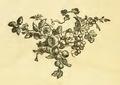 Trevoux - Dictionnaire, 1771, Pc.png