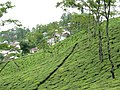 Tukvar Tea Estate (7353907286).jpg