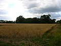 Tuppers Copse - geograph.org.uk - 225619.jpg