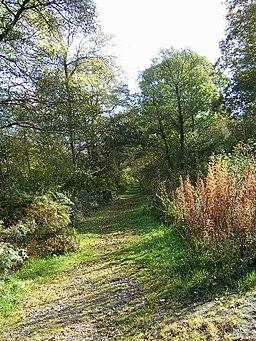 Uffmoor Wood - geograph.org.uk - 1546661