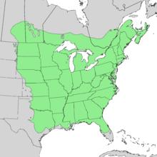 Ulmus americana range map 2.png