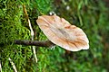 Unidentified Fungus 5934.jpg