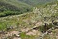 Valle del Jerte 25.jpg