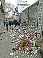 Varanasi 506 - waiting for Swachh Bharat Abhiyaan (34169064322).jpg