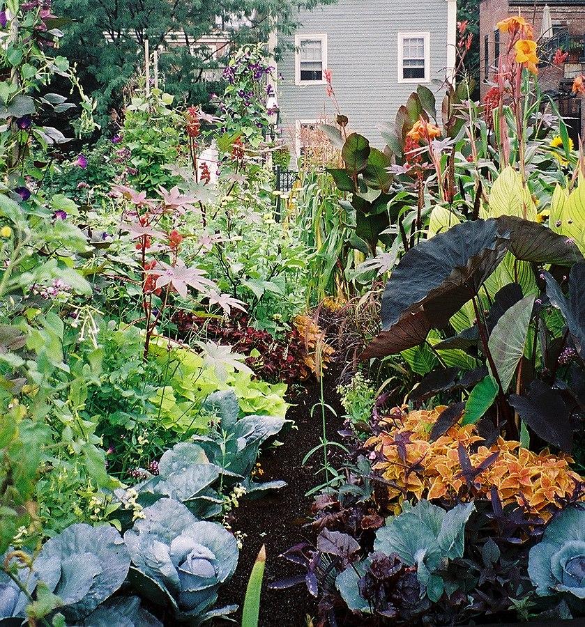 https://upload.wikimedia.org/wikipedia/commons/thumb/1/11/Vegetables_and_ornamental_plants_in_SELROSLT%27s_Rutland-Washington_Garden.jpg/839px-Vegetables_and_ornamental_plants_in_SELROSLT%27s_Rutland-Washington_Garden.jpg