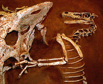 Tucson Gem & Mineral Show - Protoceratops and Velociraptor fossil  replicas, 2007 show
