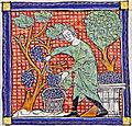 Vendanges médiévales.jpg