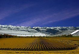 262px Vi%C3%B1edos de Mendoza