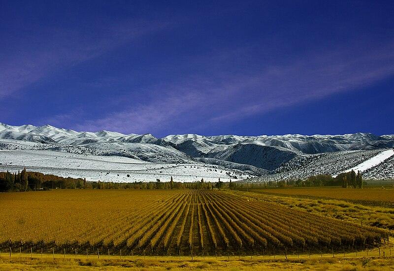 File:Viñedos de Mendoza.jpg
