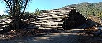 Victorian Central Highlands log dump 01 Pengo.jpg