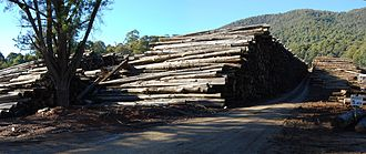 Marysville, Victoria - Image: Victorian Central Highlands log dump 01 Pengo