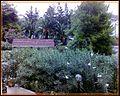 Vieste - panoramio (102).jpg