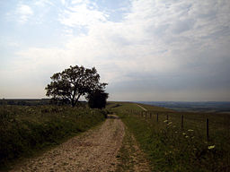 none  The view from Walbury Hill, looking towards Combe Gibbet