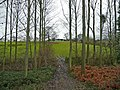 View through the wood to Upper House Farm - geograph.org.uk - 644935.jpg