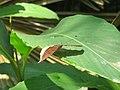 Views around Kannavam forest (21).jpg