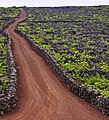 Vineyards in the Azores with rock walls to protect vines.jpg