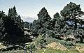 Vinuesa, Sierra del Portillo de los Pinochos 10.jpg