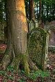 Waibstadt - Jüdischer Friedhof - mittlerer Teil - eingewachsener Grabstein 1.jpg