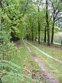 Wandelpad in Nationaal Park de Hooge Veluwe.JPG