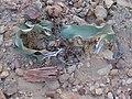 Welwitschia Versteinertes Holz Damaraland.jpg