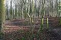 West Wood - geograph.org.uk - 1150444.jpg