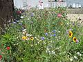 Wildflower Project South Main District Memphis TN 2012-04-22 011.jpg