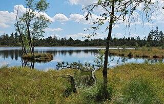 Wildsee (Kaltenbronn)
