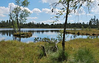 Kaltenbronn (Gernsbach) - The Wildsee in the Kaltenbronn Nature and Woodland Reserve