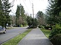 WindStorm-NorthupWayTree2.jpg