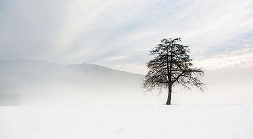 Winterlärche