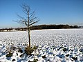 Wintry fields - geograph.org.uk - 1630574.jpg