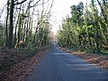 Wooded Lane off the Coldred Road - geograph.org.uk - 633981.jpg