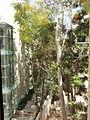 YAD BEN ZVI VIEW 106 20120911 131059.jpg