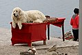 Yamdrok Tso-06-Hund-2014-gje.jpg
