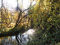 Yellow and greenish trees plus creek landscape.jpg