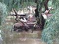 ZOO Bojnice - pelikany.jpg