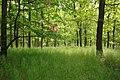 Zvole, Zvolská homole, lesy II.JPG