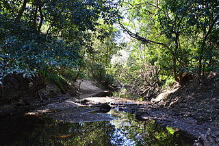 Lane Cove National Park Protected area in New South Wales, Australia