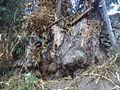 Árbol antiguo.JPG