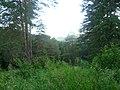 Вид с Андроновских гор, начало июля 2011 - panoramio.jpg