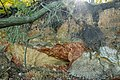 "Выход на поверхность горных пород. Ландшафтный заказник ""Лысая гора"". Запорожская область, Украина.jpg"