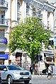 Вікові липи, ясени та каштани по вулиці Володимирській у Києві. Фото 3.jpg