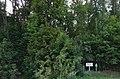 Городоцький ботанічний.jpg