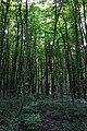 Городоцький ботанічний заказник, 68-258-5017.jpg