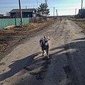 Добрый козёл в селе мальцево - panoramio.jpg